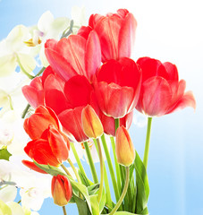 Fresh red tulips  and flowers orchid.Springtime