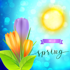 Spring greeting card with yellow and violet crocuses