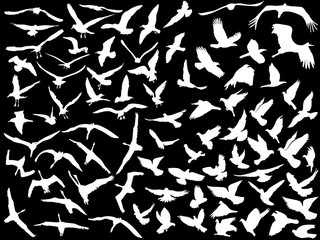 large collection of white flying birds
