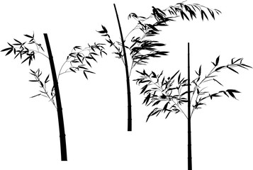 collection of bamboo three black branches illustration