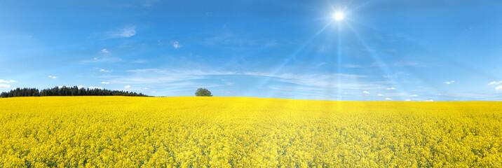 Blühendes Rapsfeld Panorama mit Sonnenstrahlen