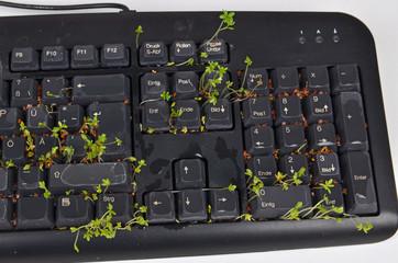 Tastatur, Büro, Textverarbeitung