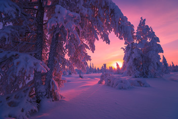 Winter landscape with forest, cloudy sky and sun