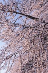 ensemble de branches au petit matin