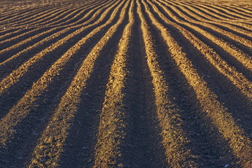 Furrows row pattern in a plowed field prepared for planting potatoes crops in spring. Wall mural
