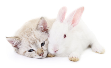 Wall Mural - kitten with rabbit