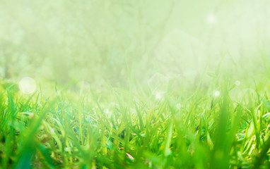 Abstract nature grass with bokeh and glowing light, blurred and