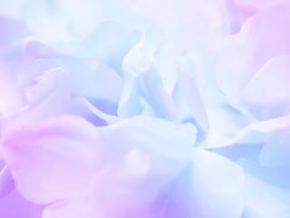 Flower background 17