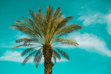 Palm Tree over sky background, USA