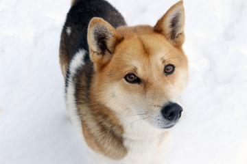 積もった雪と犬