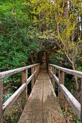 Head on view of a wooden bridge branching out towards a shady forest trail