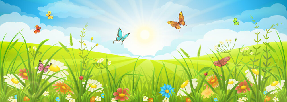 Floral summer or spring landscape, meadow with flowers, blue sky and butterflies