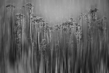 blurred black and white background grass winter frost