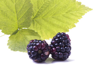 two natural blackberries with leaves
