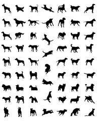 Black silhouettes of different races of dogs, vector