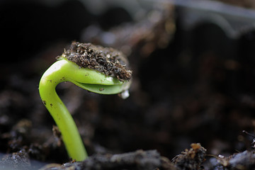small sprout from seeds