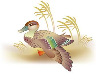 Illustration of duck, vector cartoon image.