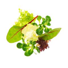 Bunter, gemischter Salat - Blattsalate