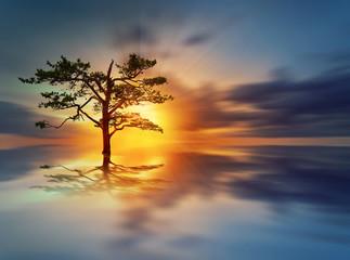 Sunrise tree