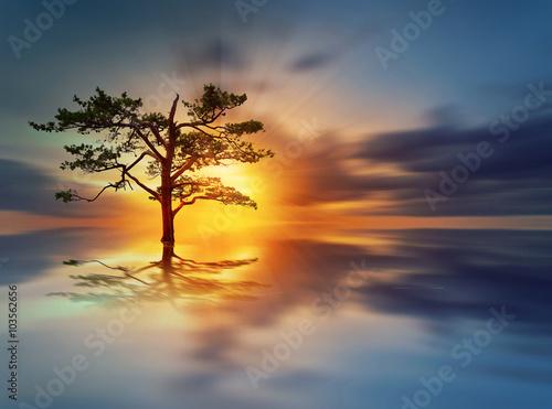 Fototapete Sunrise tree