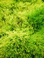 Vibrant Greens