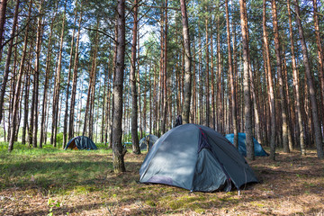 Tent in morning forest. Camping and beautiful nature