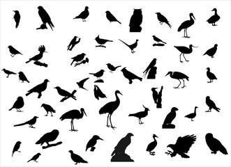 Vögel in Europa Wall mural