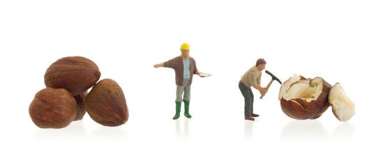 Miniature worker working with hazelnuts