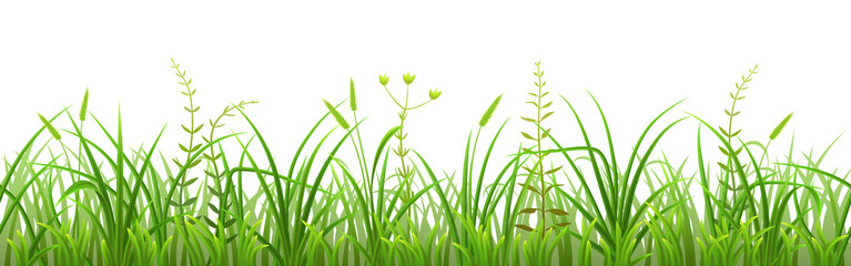 Wall Mural - Seamless green grass pattern on white background