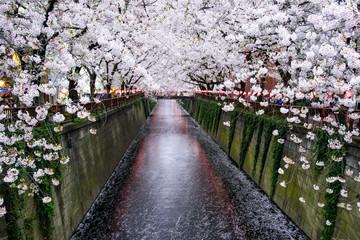 Wall Mural - Nakameguro Kanal in Tokio während der Kirschblüte im Frühling