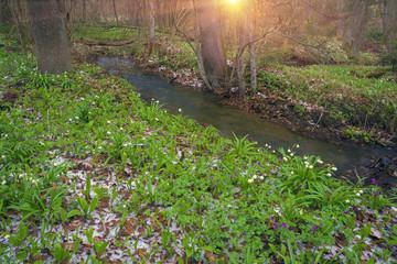 Winter flowers of spring