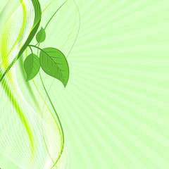 Green leaves on abstract vector wave background. Natural composition.