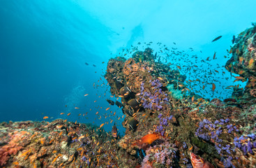 Coral reef with soft and hard corals