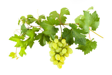 Green grapes on branch