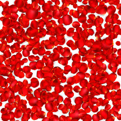 Background of beautiful red rose petals. EPS 10
