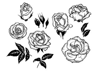 flowers and leaves of rose
