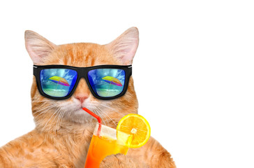 Cat wearing sunglasses relaxing in the sea background. Isolated on white.