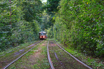 Tram goes through a tunnel in the forest. Kiev, Ukraine