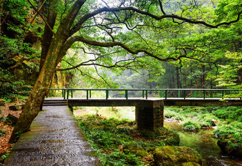 Scenic view of stone walkway and bridge over river among woods