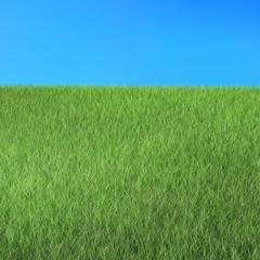 Naturlandschaft mit Gras und Himmel Render