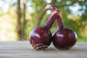 A pair of natural red onions on a wooden table in the garden