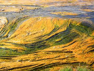 Surreal Algae