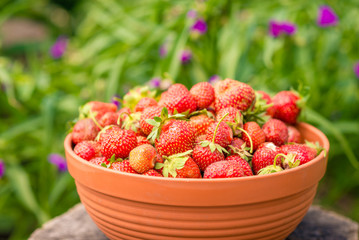 Big brown bowl of fresh ripe strawberries. Sunny summer day on countryside village.