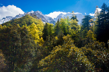 Mountain with snow and pine forest in a sunshine day of autumn