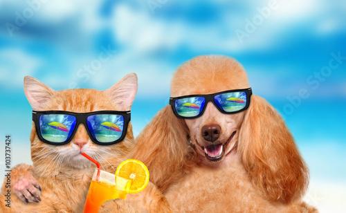 Певец собака юмор очки  № 1527350 без смс