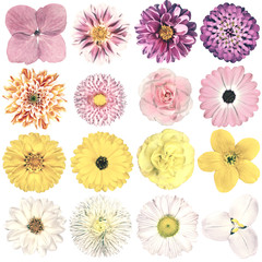 Various Vintage Retro Flowers Collection Isolated on White