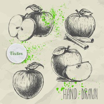 Set of hand drawn apple. Vintage sketch style illustration. Organic eco food
