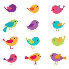 vector birds set