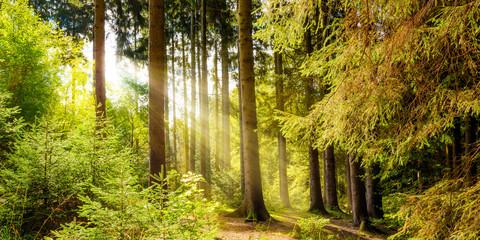 Wald Landschaft im Sommer mit Sonnenstrahlen