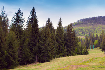 landscape of grassy yellow valley, row of green fir-trees and hi